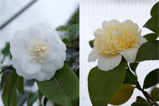 Rose og anemone form
